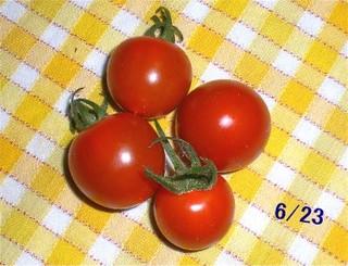 Tomato080623