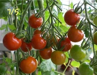 Tomato080705