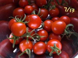 Tomato080713