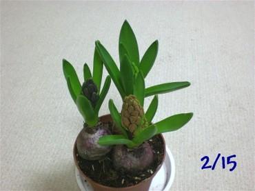 Kyukon090215