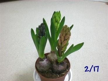 Kyukon090217