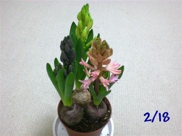 Kyukon090218