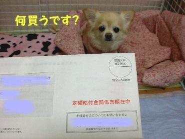 090330kyufukin