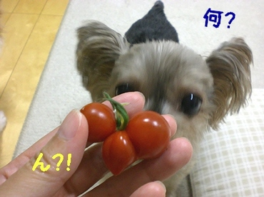 Tomato090703b