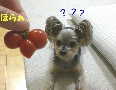 Tomato090703d