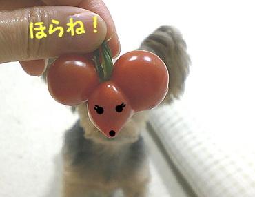 Tomato090703e