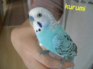 090811kurumi_2