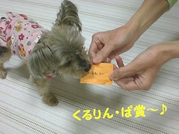 091011kujibiki2