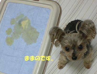 100213gahaku2_2