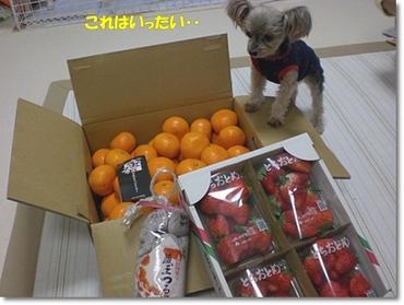 110107fruits1