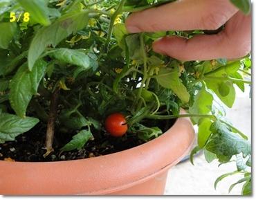 Tomato0508