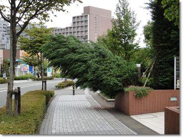 Taifu3_2