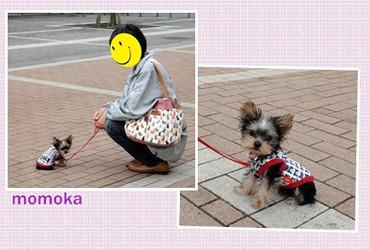 Momoka0408