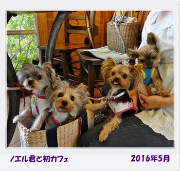 2016054_2