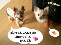 Daichan_1