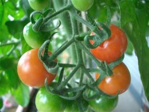 Tomato070620