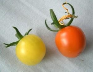 Tomato070626
