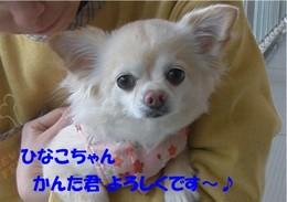 Yorosikukinako